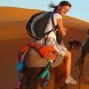 kamele.jpg
